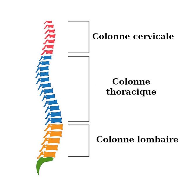 Les trois parties de la colonne vertebrale